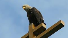 Bald Eagle Stare - stock footage