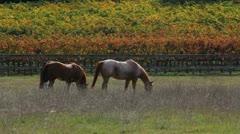 Horse Autumn Scenic Stock Footage
