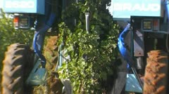 Grape harvest - NTSC - stock footage