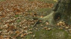 Syksyn lehtiä syksyllä kohtaus putoavat lehdet Arkistovideo