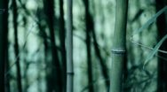 Wind shaking bamboo,quiet atmosphere. Stock Footage