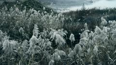 River reeds in wind,shaking wilderness,Black and white style. Stock Footage