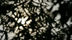 Wind shaking bamboo silhouette,sunrise,sunset,sunshine,Hazy style. Stock Footage