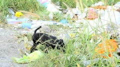 Stray Puppy in Garbage - stock footage