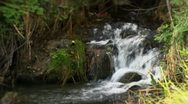Water stream in forest Stock Footage