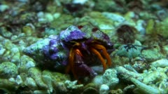 Crab close up 20111120 183607 Stock Footage