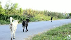 Street Dogs Stock Footage