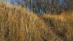 autumn landscape,hill. - stock footage