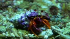 Crab close up 20111120 184102 Stock Footage