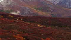 Stock Video Footage of Denali Fall Colors