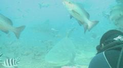 Pregnant bull shark not hun Stock Footage