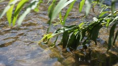 Tree leawes in a stream - stock footage