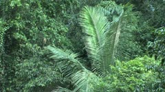 Amazone rainforest Stock Footage