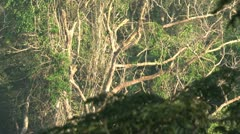 Amazone rainforest - stock footage