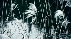 river reeds in wind,shaking wilderness,reflection,Hazy style. - stock footage