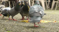 Pigeons and seagulls scavenging and eating food, #3 Stock Footage