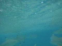 Reef sharks swimming underwater in Bora Bora Stock Footage