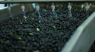 Stock Video Footage of Oil mill - olive oil production