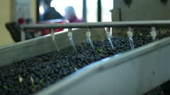 Oil mill - olive oil production - stock footage