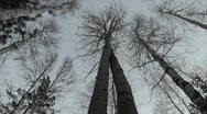 Trees Stock Footage