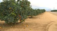 Agriculture, Southern California orange grove, row and road Stock Footage
