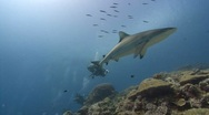 Stock Video Footage of Sharks swims quickly past SCUBA Divers