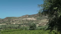 Olive groves in Greece Stock Footage