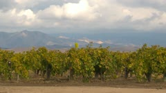 San Joaquin valley vineyard Stock Footage