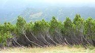 The anomalous pine-tree in the mountains Stock Footage