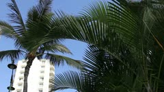 Hotel palm Stock Footage