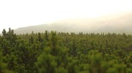 Stock Video Footage of The pine-tree in the mountains