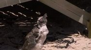 Stock Video Footage of Molting South African baby penguin