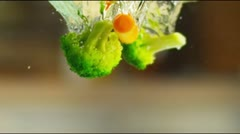 Vegetables in slow motion Stock Footage