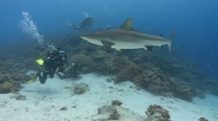 Shark swims past SCUBA divers Stock Footage