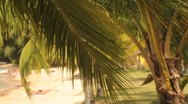 Palm Leaves(HD)c Stock Footage
