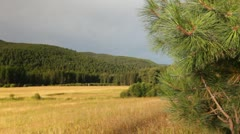 Meadow forest mountains nature Stock Footage