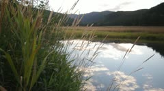 River stream pond reflection dolly nature Stock Footage