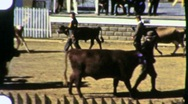 Stock Video Footage of Cattle Judging H4 Club at State Fair Circa 1945 (Vintage Film Home Movie) 1322