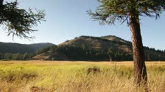 Trees mountains valley plains nature Stock Footage