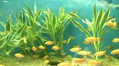 marine life - stock footage