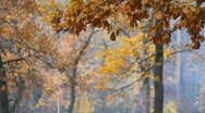 The picturesque foggy autumn forest Stock Footage