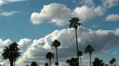 Palm Blue Sky Time Lapse Stock Footage