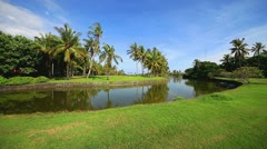 Golf club course, green grass, fairway palm trees, tree landscape, background - stock footage