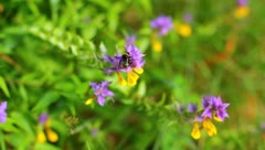 The working bees on the flowers - stock footage
