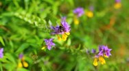 Stock Video Footage of The working bees on the flowers