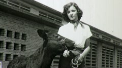 FARM GIRL with Prize Cow CATTLE State Fair 1940s Vintage Film Home Movie 1363 Stock Footage