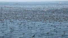 Birds and Anchovies Stock Footage