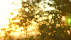 The sunshine throught the branches (sunrise or sunset) Stock Footage