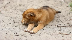 The eating and playing puppies Stock Footage