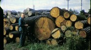 Stock Video Footage of UNCUT TIMBER OLD GROWTH Sawmill 1950 (Vintage Film 16mm Home Movie) 1390